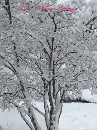 Pretty snow tree